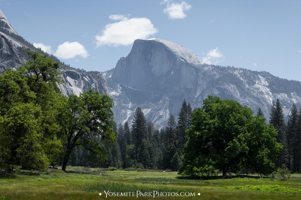 Half Dome and lush green meadow in early May - Photo by Nathan Allen