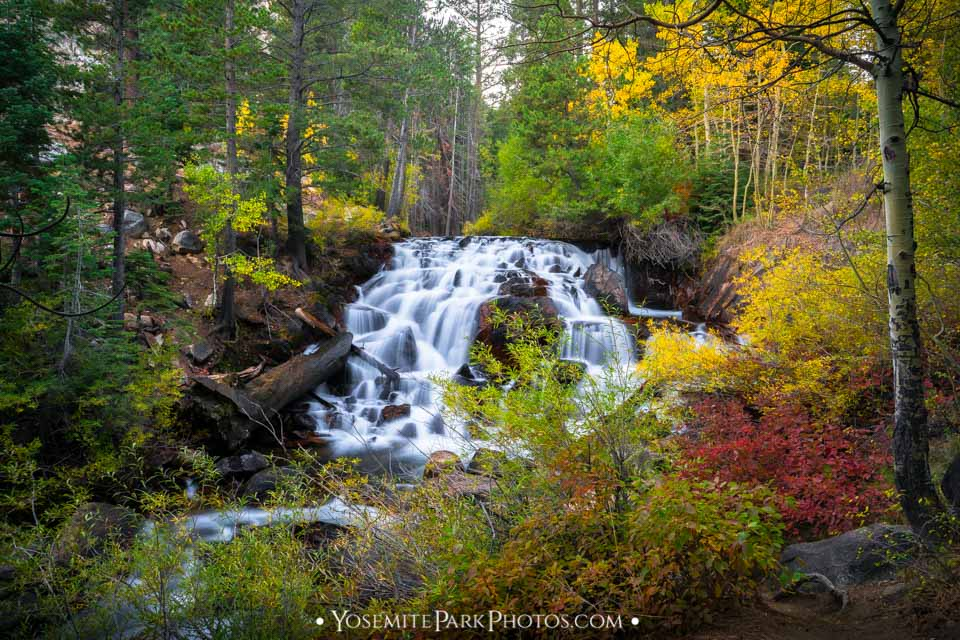 Fall colors in Forest at at Lee Vining Falls, Long Exposure Yosemite Waterfalls
