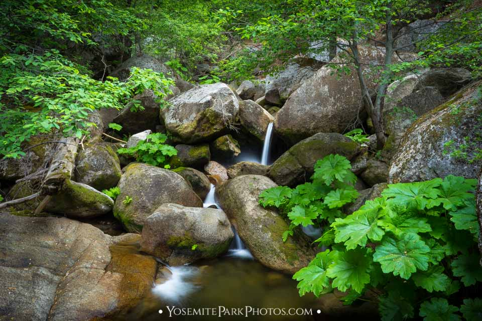 Cool, Tamarack Creek Canyon + Falls in August, Long Exposure - Yosemite Creeks