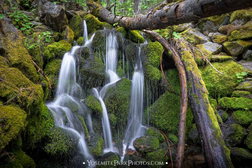 Stringy Avalanche Creek Falls and Mossy Rocks - Long Exposure Yosemite Waterfalls by Nathan Allen