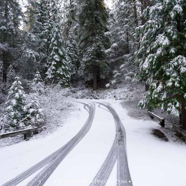 Snowy Evergreen Road With Tire Tracks in December - Yosemite Seasons