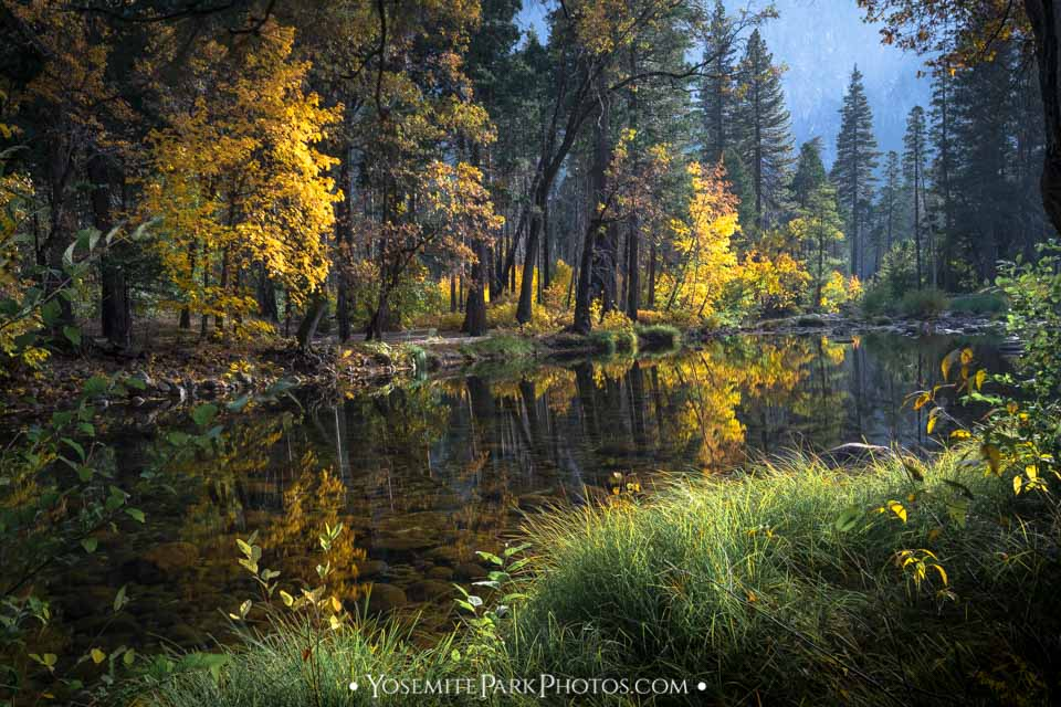 Fall color forest reflection in Merced River