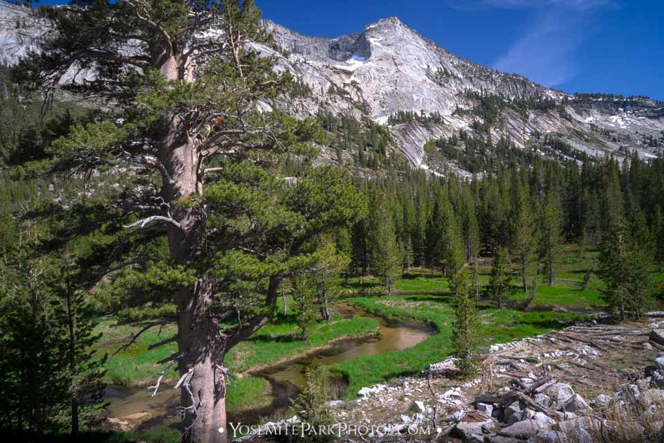 Meandering Tenaya Creek and green Meadow, with Tenaya Peak