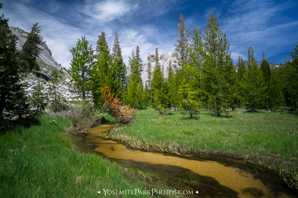 Peaceful, Clear Tenaya Creek in June, Tioga Road - Yosemite Creeks