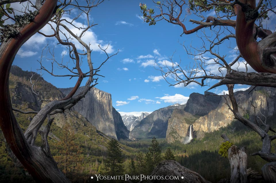 Yosemite Valley Views through mazanita trees near Glacier Point Road
